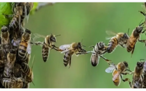 BEES ARE DECLARED AS THE MOST IMPORTANT BEINGS ON THE PLANET – Without them and their work there is no life!