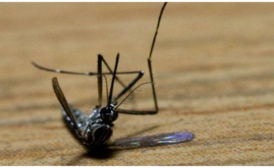 Poprskajte OVU MJEŠAVINU po kući: Za 2 sata NESTAĆE svi komarci, muhe i bubašvabe