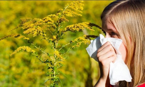 Spas od AMBROZIJE: Narodni ruski lijek koji će vam pomoći da suzbijete alergijsku reakciju