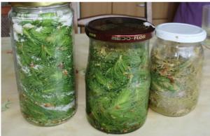 Protiv kašlja, bronhitisa, upale grla, za jak imunitet i gastritis: Recept za sirup od borovih iglica